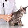 Ветеринарные клиники в Пряже